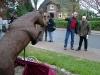 pferdefreundlg-003
